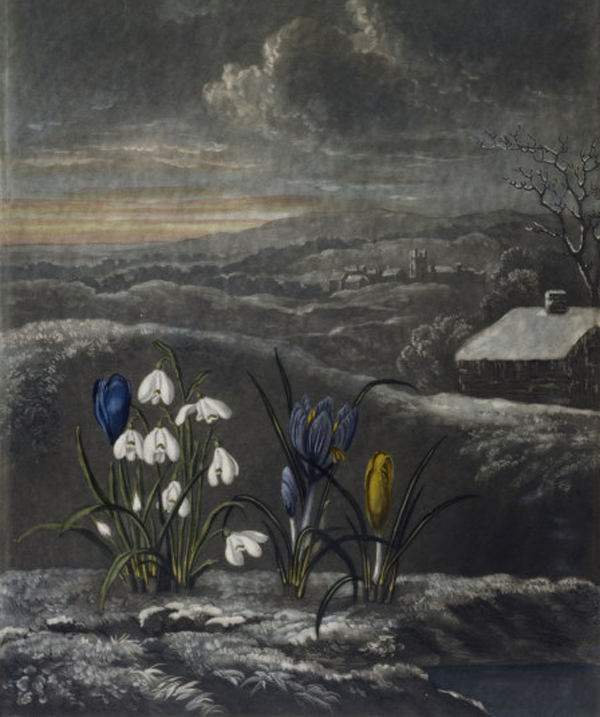 Schneegloeckchen, Krokusse - Snowdrops and crocusses - colour aquatint, 1804, by William Ward (1766-1826) from a coloured drawing by Abraham Pether (1756-1812)