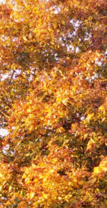 come-little-leaves-02