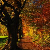 October Trees Siegfried Sassoon